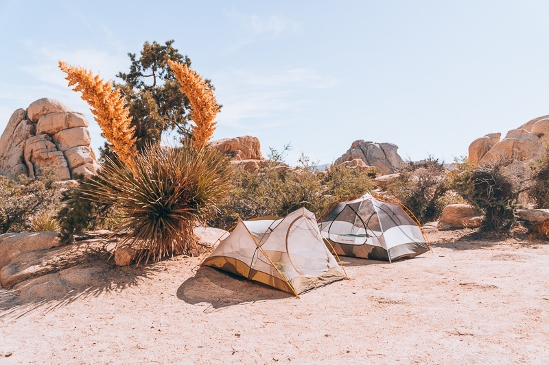 The 10 Best Things To Do In Joshua Tree National Park The Wandering Queen